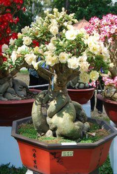 4 Ways to Grow and Care  a Bonsai Tree