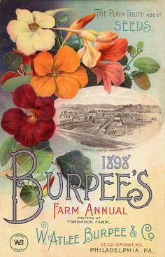 Burpee's 1898