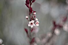 float 2 by mrs. french, via Flickr
