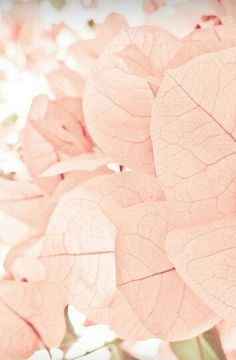 Blush Pink - Capturing the Beauty in Nature. xx Dressed to Death xx #inspiration #photography #art #style #fashion