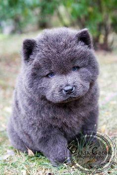 anim, dogs, teddy bears, colors, gardens