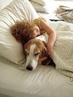Basset hounds <3