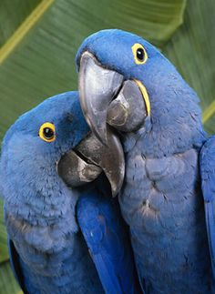 My fave of the parrots