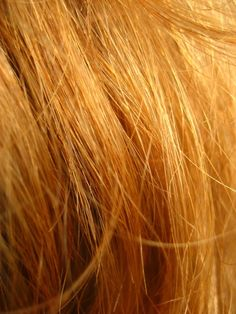 """""""Red hair is seen on the heads of only less than one percent of people.in the world. Most redheads live in the U.K., Ireland, and former colonies of U.K. like Australia.        The highest percentage of natural Redheads in the world is in Scotland (13%), followed closely by Ireland with 10%. In the US, about 2% of the population are natural redheads.        Redheads are becoming rarer and could be extinct in 100 years, according to genetic scientists.""""        - roodharigen.nl  http://www.roo..."""