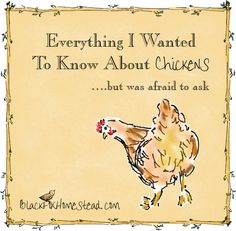 Everything I Wanted to Know About Chickens But Was Afraid to Ask