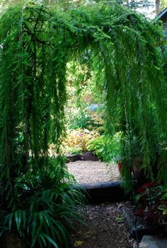 Garden Room Entrance - Simple garden room entrance arbor planted not with a vine, but with a weeping bald cypress...