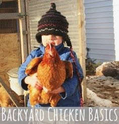 backyard chicken basics
