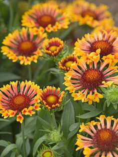 7 Summer Perennials You Want in Your Garden - different plants than the usual.