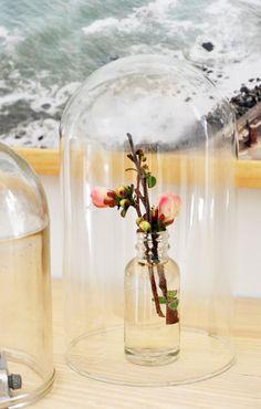 quince blossoms under vintage cloche