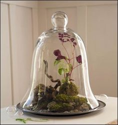 glass cloche, or bell-shaped jar shelters a landscape of moss ...