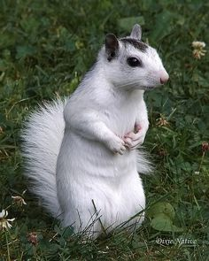 So cute!! I've never seen a white squirrel before!!