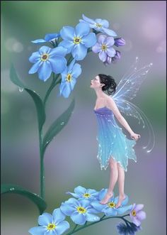 Forget me not fairy...
