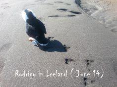 Where is Rodrigo ?  #travel #iceland #islande #rodrigo