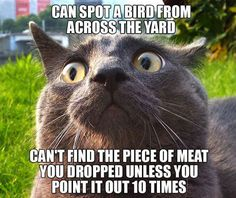 Spot a bird across the yard, but can't find the piece of meat you dropped unless you point it out 10 times