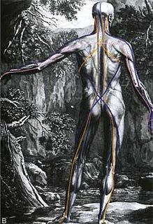 """Anatomical Man    From Tom Myers and Anatomy Trains [anatomytrains.com]    """"Change your body about your mind."""""""