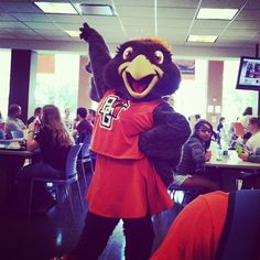 Frieda Falcon #BGspirit   Bowling Green State University   Bowling Green State University