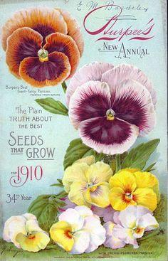 Vintage Burpee Seed Catalog pansies