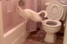 One reason your cat should not use the toilet