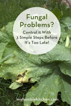 Terrific Tip! Fungal Problems? Control it with these 3 simple steps before it's too late! | myhumblekitchen.com