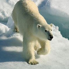 Tell Secretary Jewell: No Drilling in the Arctic Ocean The pristine waters of America's Arctic Ocean are in danger.