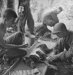 American G.I.s treating wounded combat dog during WWII action on the Orote Peninsula - 1944
