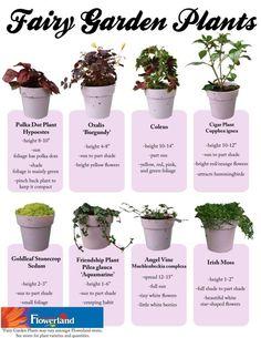Fairy Gardening plants - Flowerland