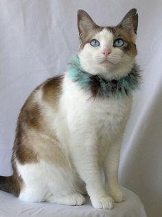 What A Cute Kitty!