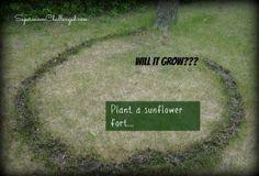 Plant a sunflower circle fort - summer bucket list