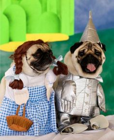 costum, dog pics, tin man, pet, yellow brick road, pug dogs, belle, wizard of oz, halloween
