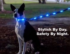 Keep Your Dog Safe With An LED Leash  ... from PetsLady.com ... The FUN site for Animal Lovers