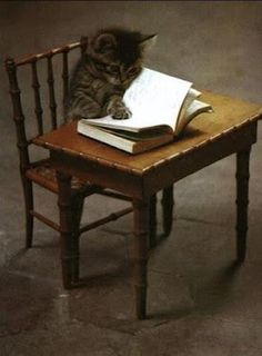 A tiny cat with a tiny book at a tiny desk!