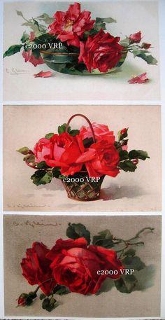 Print FREE SHIP 3 Cabbage Rose Prints by VictorianRosePrints, $11.99