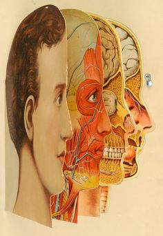 layered medical illustration