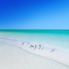 Seagulls Enjoying A Day At The Beach...