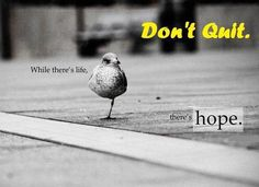 life quotes, wall photo, funny pics, picture quotes, little birds, motivational quotes, inspir, quit, hope