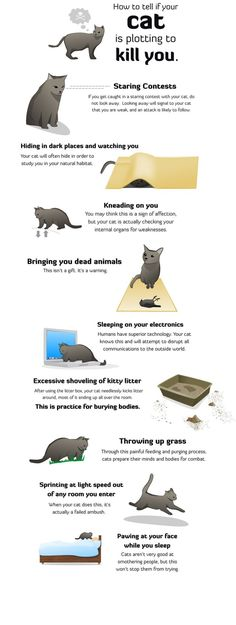 How to tell if your cat is plotting to kill you. I have 3 and am surrounded. @Gee Rodger take note! #funny #cats