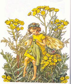 Cicely Mary Barker …the flower fairy lady.