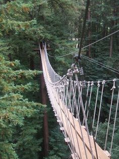 Photos for Mount Hermon Redwood Canopy Tour | Yelp