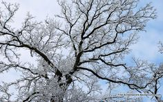 Google Image Result for http://free-screensavers-backgrounds.com/wp-content/uploads/2010/12/snow-branches.jpg