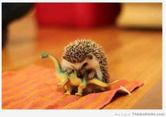 When Hedgehogs Ruled the Earth