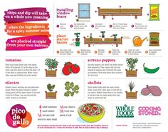 How to Start a Pico de Gallo Garden