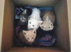 crazy cats, kitty cats, kitten, heart, blue