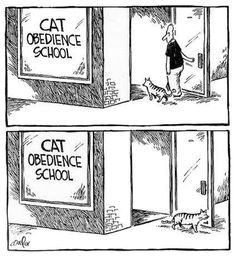 Those who have a cat will understand