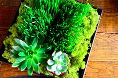 DIY Wheatgrass and Succulent Tabletop from www.reluctantentertainer.com