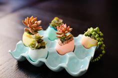 eggshell succulent planters