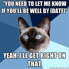 cats, side effects, chronic pain, fibromyalgia, rheumatoid arthritis, autoimmune disease, chronic ill, cat meme, ill cat