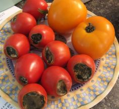 Diagnose Tomato Problems and Learn How to Correct Them --> http://www.hgtvgardens.com/tomatoes/whats-wrong-with-my-tomato?soc=pinterest