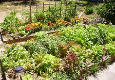 vegetable, vegetable, vegetable, vegetable garden!