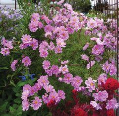 garden draw, prom dress, garden acquisit