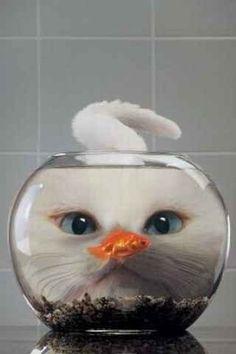 A cat behind a fish tank :-))